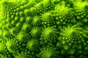 Spiraled Romanesco