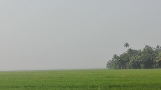 rice fields as far as the eye can see