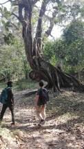 Parasite Tree