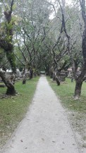 Protestant Cemetery - dark eerie feel about the place
