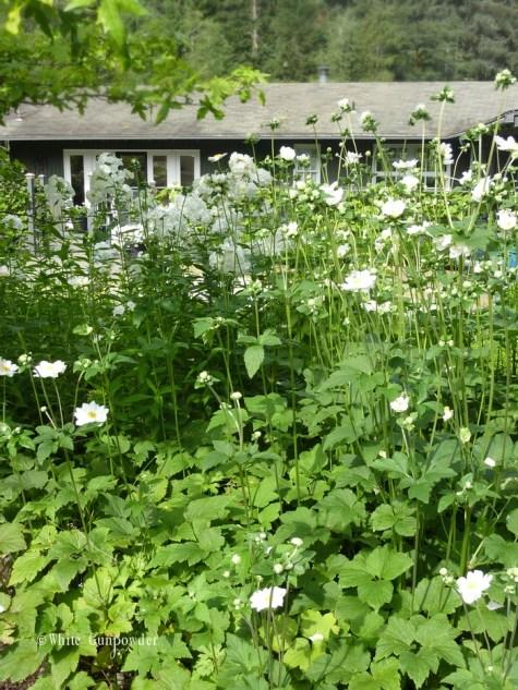 Vern & Ruthie garden
