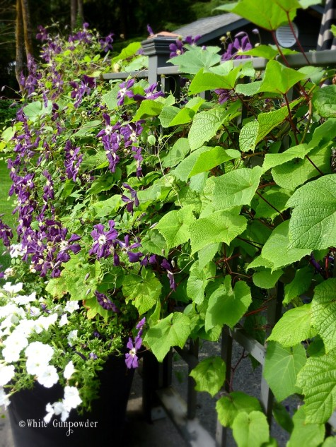 Vern & Ruthie's garden
