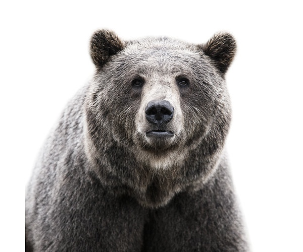 Morten Koldby, Bear