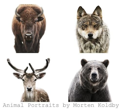 Morten Koldby 4 animal pics