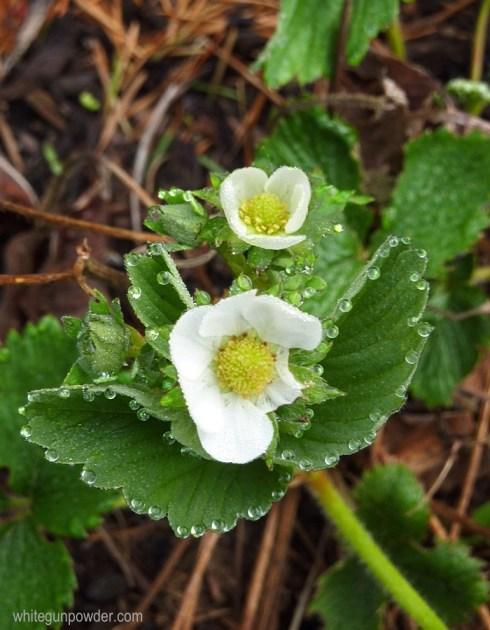 flower / herb garden
