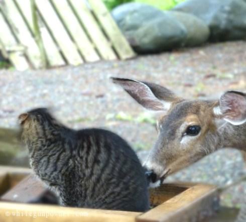 deer & cat