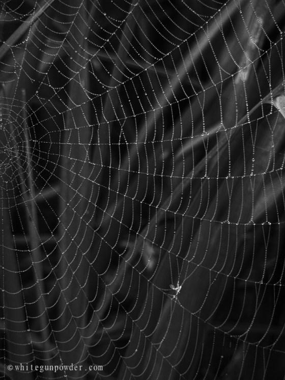 Spider Web 5