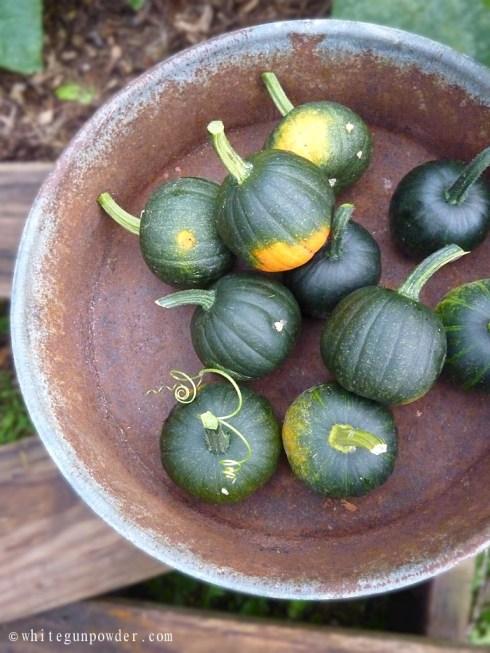 little green pumpkins