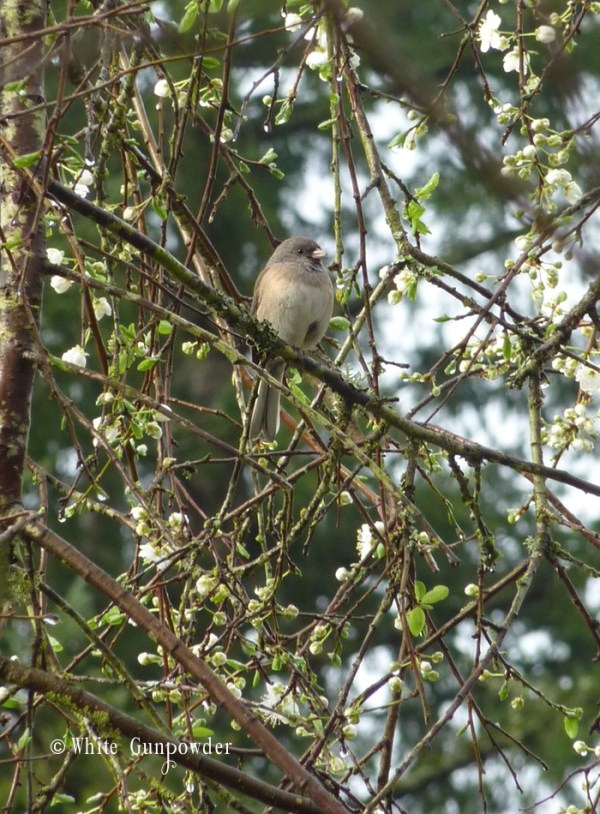 Garden - bird