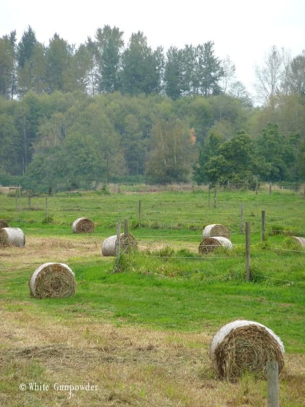 Fall - hay fields