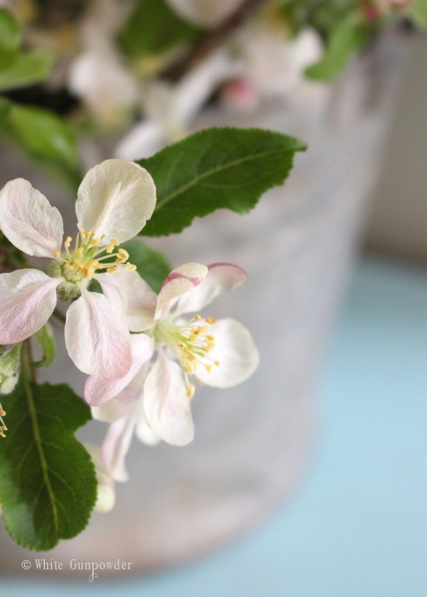 Spring blossoms - apple blossoms