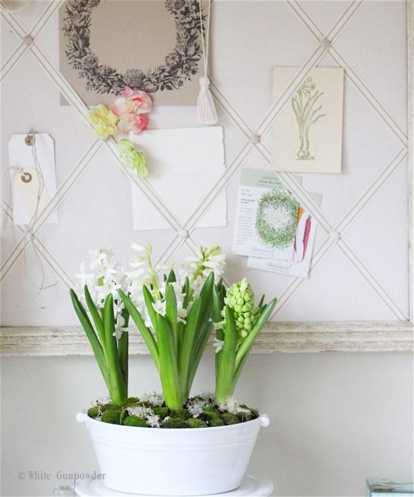 Spring flowers - hyacinths