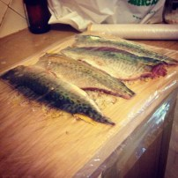 Mackerel on the cure