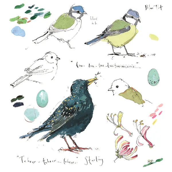 Sketchbook Starling and Bluetit - Madeleine Floyd - Limited Edition