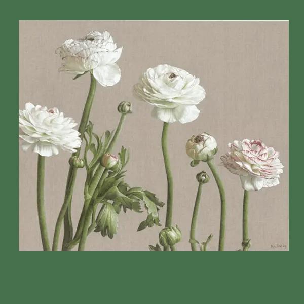Ranunculus Picotee - Mia Tarney - Limited Edition