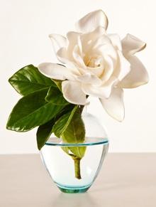 Single flower arrangement with Gardenia ~Pretty