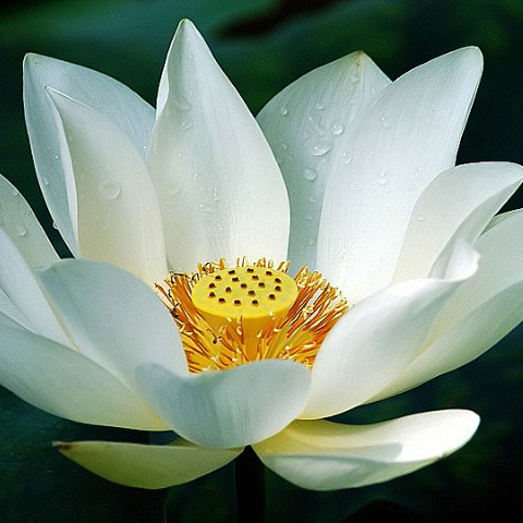 White Lotus Philanthropy Ltd.