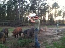 Sloppin hogs