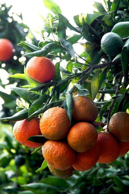 mandarin-creme-brulee-recipe