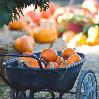 Apple Lane Pumpkin Patch Picking on @whiteonrice