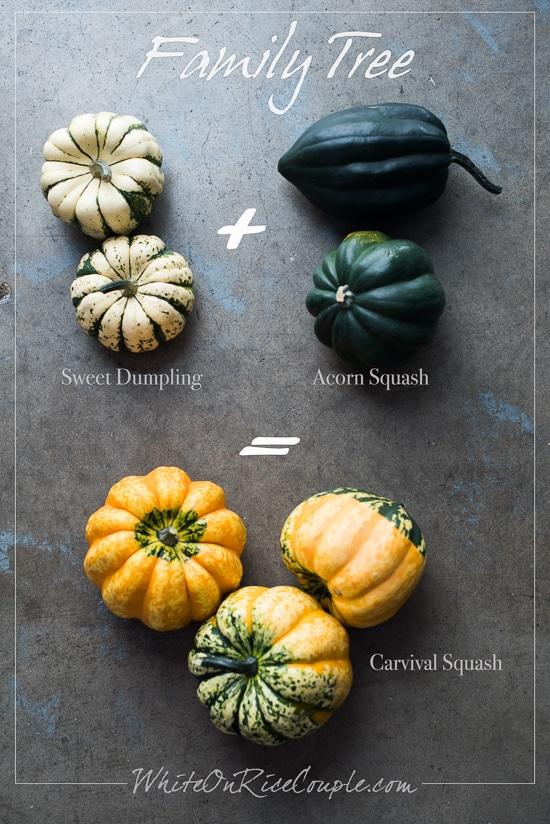 Winter Squash and Pumpkin Guide: Carnival Squash   @whiteonrioce