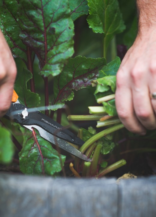 Baked Beet Greens just as delicious as Kale Chips on WhiteOnRiceCouple.com