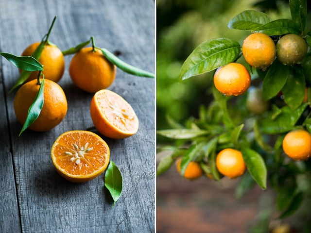 Seasonal Double Tangerine Cocktail Recipe with Fresh Tangerine Juice | @whiteonrice