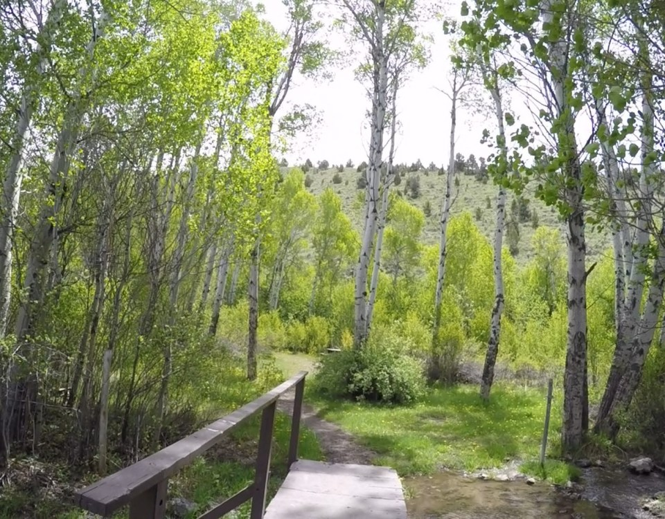 East Creek Campground near Ely, Nevada