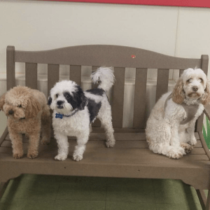 Three dogs sitting on bench at camp