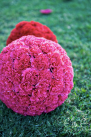 Jason Wedding-Balls of bright carnations