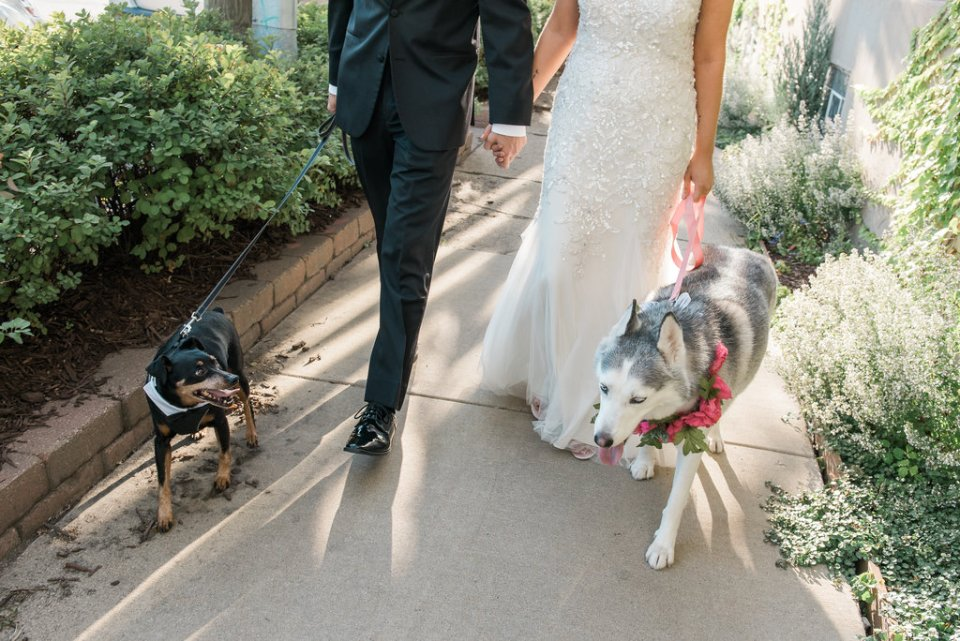 Bride and groom walking their dogs outside Room 1520 in Chicago IL
