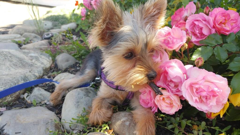 South Rock Dirt - puppy in garden