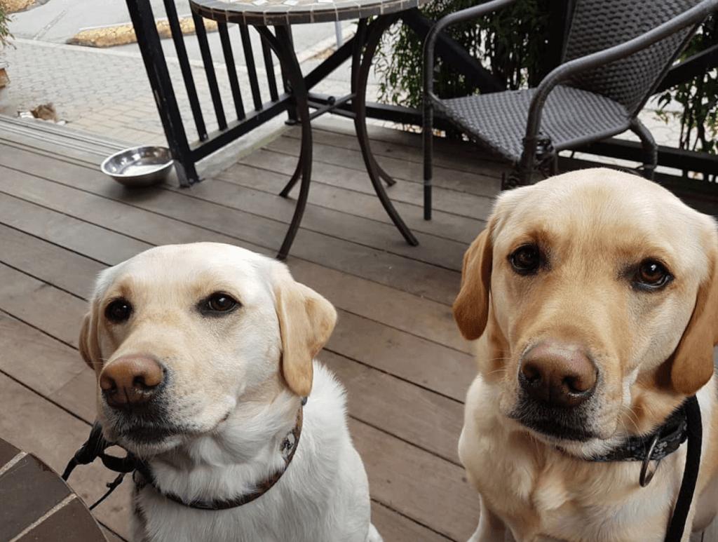 Dog Friendly Restaurants Crescent Coffee House