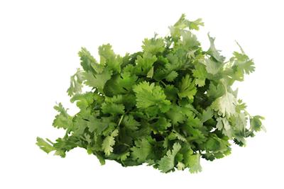 cilantro essential oil 2