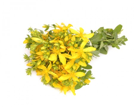 st. johnswort essential oil 2