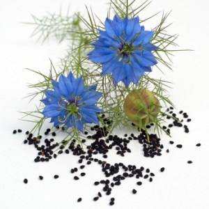 Black Seed Botanical Oil