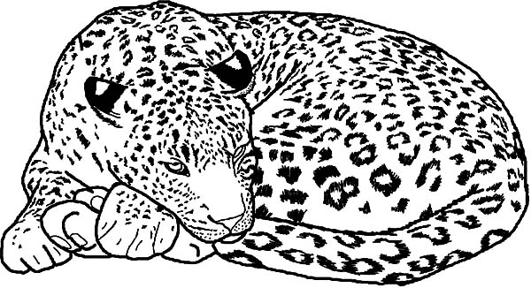 1203 leopard free clipart 9