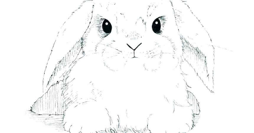 8939 rabbit free clipart 57