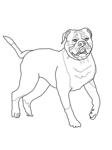american bulldog coloring page dog coloring page free