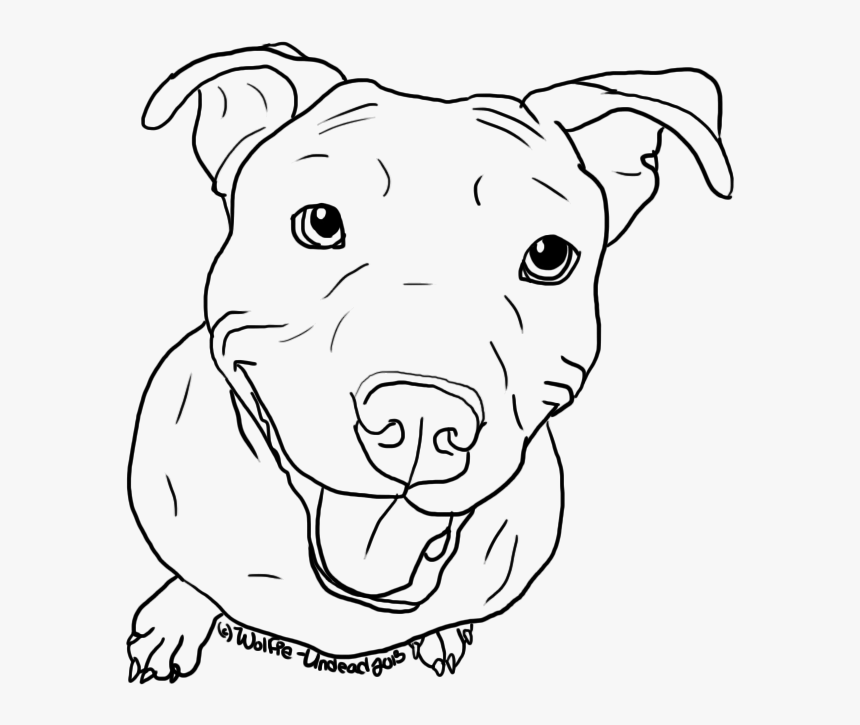 american pit bull terrier puppy drawing line art coloring
