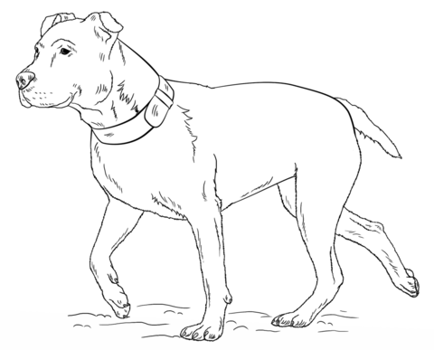 american pitbull terrier coloring page free printable