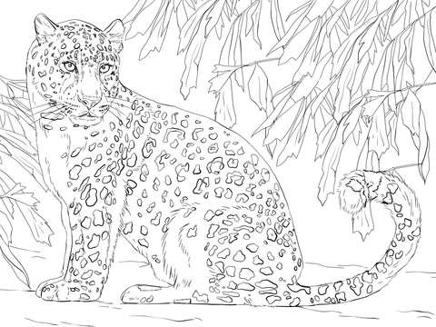 amur leopard coloring page free printable coloring pages