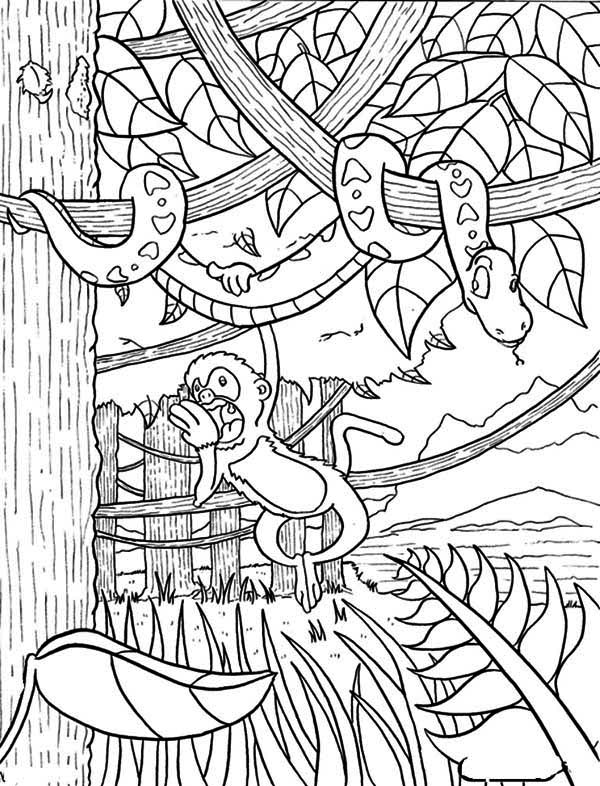 animals of the rainforest coloring pages