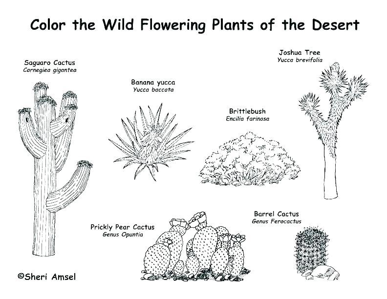 arizona desert animals coloring pages