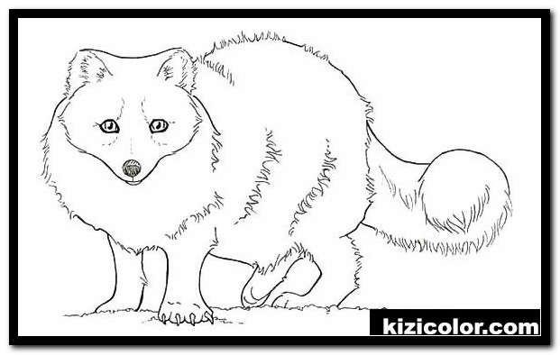 artic fox free printable coloring pages for girls and boys