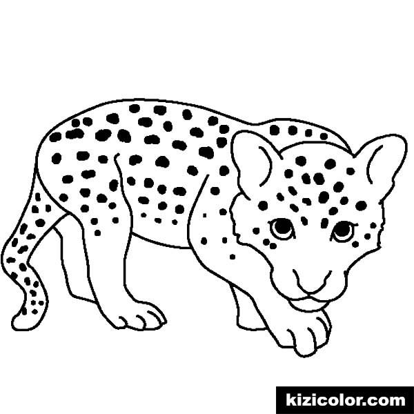 ba leopard kizi free coloring pages for children