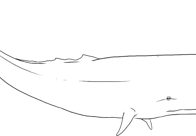 blue whale coloring page colouring pages whales and the best