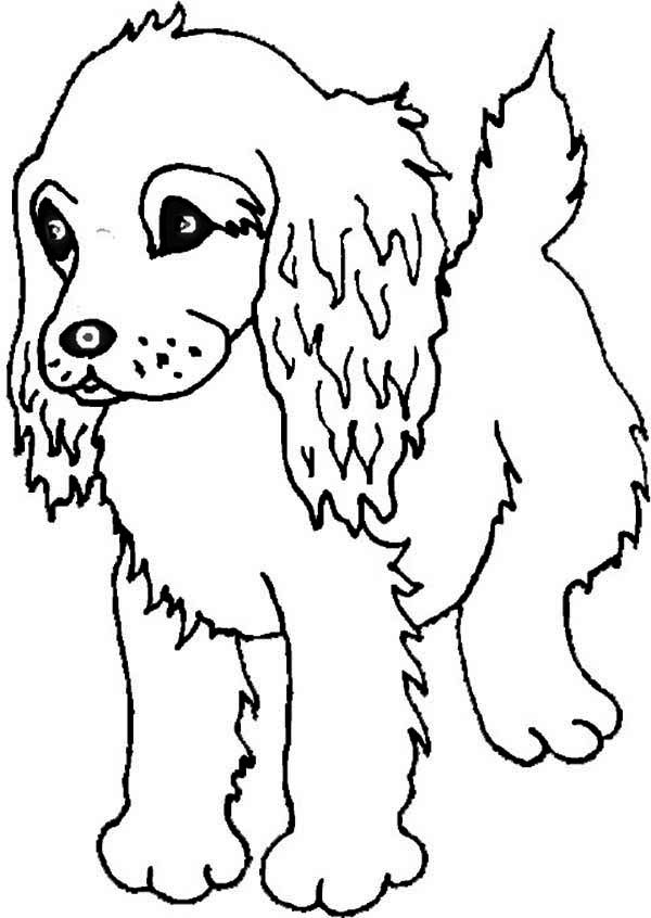 boykin spaniel puppy coloring page freepuppies coloring