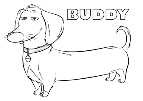 buddy from the secret life of pets coloring page imagine