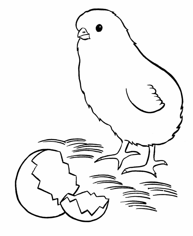 chick 94 animals printable coloring pages